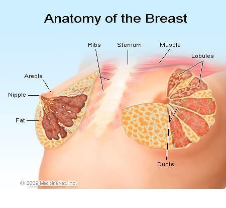 Breast Lumps (in Women)