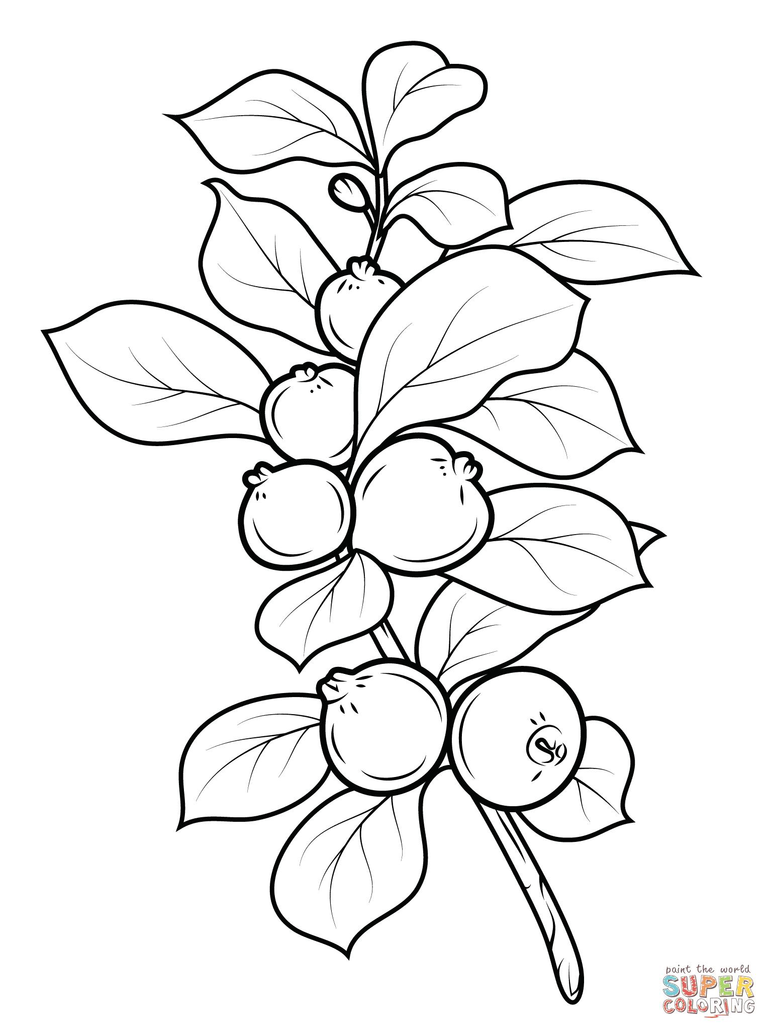 Dibujo De Guayaba Fresa Para Colorear Dibujos Para Colorear