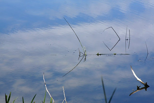 water, sky, grass (whitaker ponds)