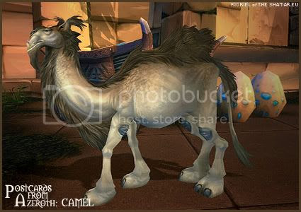 Postcards of Azeroth: Camel, by Rioriel Ail'thera of theshatar.eu