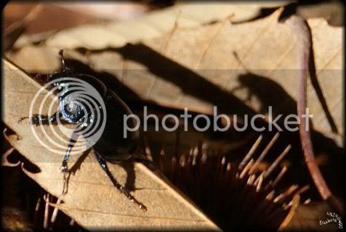 scarabee photo bois
