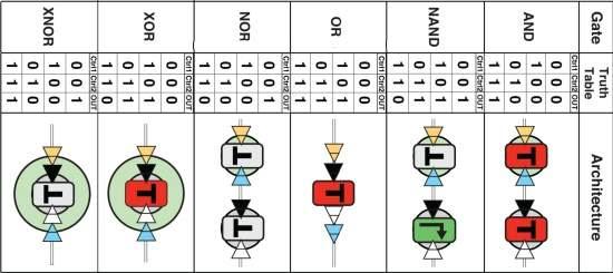 Transístor biológico leva computação para interior de células vivas