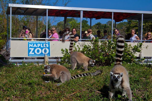 Naples Zoo at Caribbean Gardens is Fun for All Ages - Sun Palace Vacation Homes
