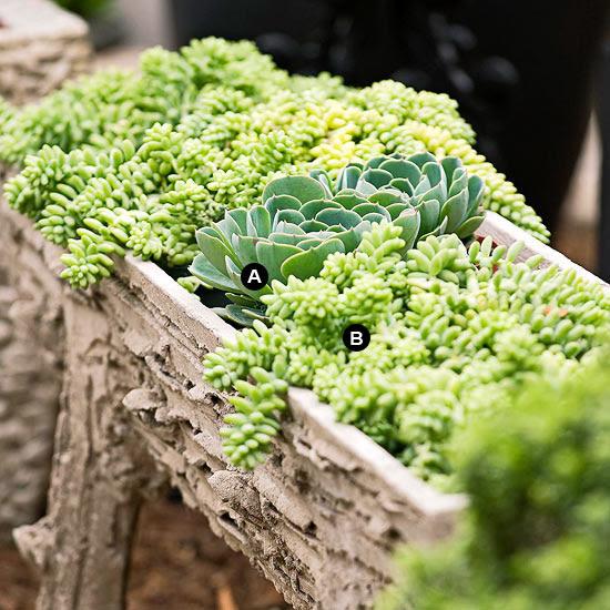 Faux bois succulent trough