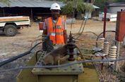 Kabel Dirusak Monyet Babun, Aliran Listrik di Kota Ini Putus