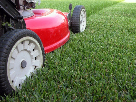 Lawn Mowing Height - Weed and Feed Lawn Care