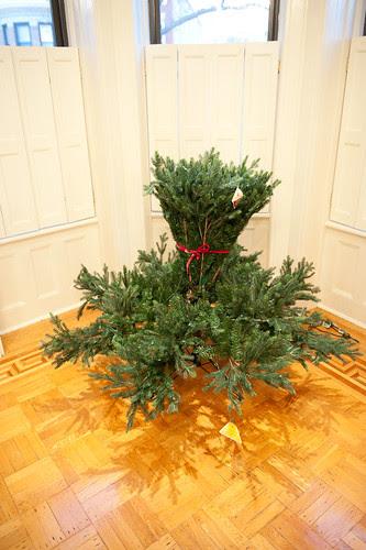 ChristmasTreeBalsamHill-6