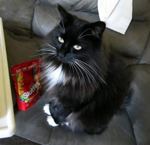 skittles-cat-1