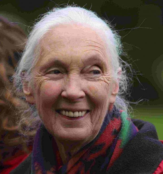 'MASSIVE SUFFERING': Jane Goodall