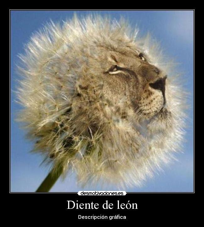 Diente De León Desmotivaciones