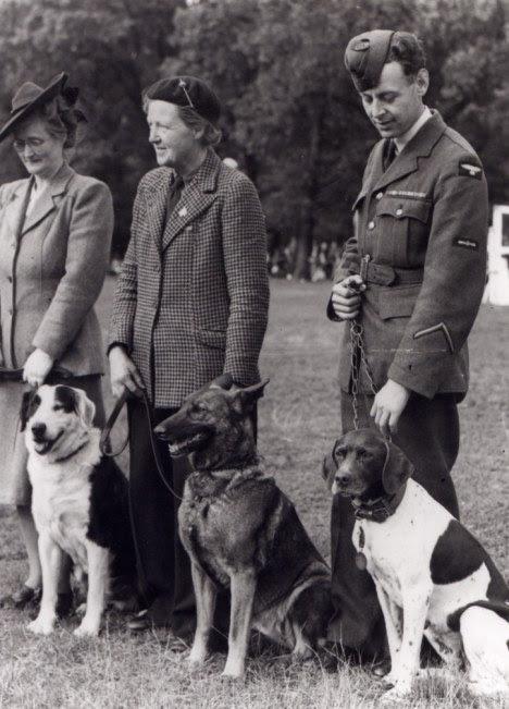 Blog Safari Club, Judy, un perro héroe en la Segunda Guerra Mundial