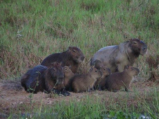 Photos of Pantanal Nature Wildlife Tours, Cuiaba