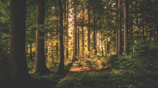 New research finds living near a forest is good for your brain