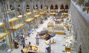 DinosaurGalleryOxfordNaturalHistoryMuseum