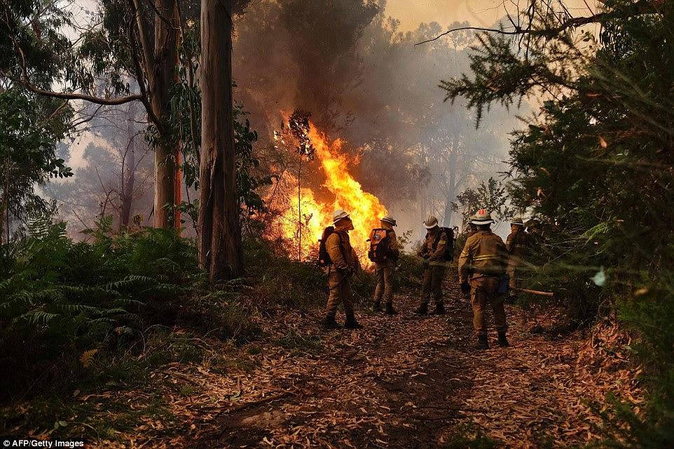 Bombeiros preparam para combater um incêndio florestal na Calheta na Madeira.  Os incêndios na ilha estão agora sob controle hoje, mas autoridades temem um retorno das chamas com a continuação ventos violentos