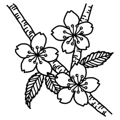 サクラ1サクラ桜春の花無料白黒イラスト素材