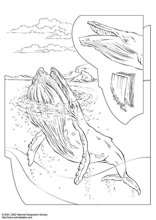 ezonaf: sperm whale cartoon