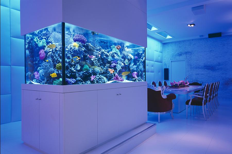 The aquarium - an exotic addition to the interior