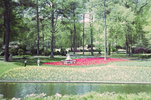 Lone Pine Garden by bahayla