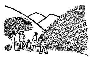 Milpa tradicional en las laderas (Dibujo: Rini Templeton)