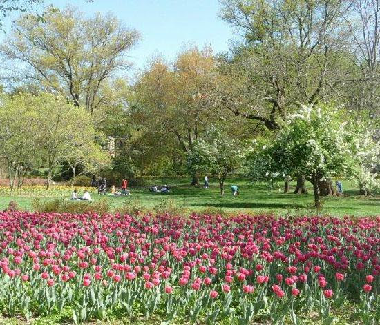 Tulips and trees in Sherwood Gardens HomeRome.com