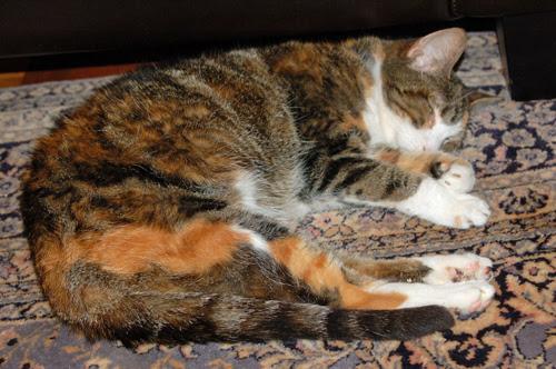 frisker-napping.jpg
