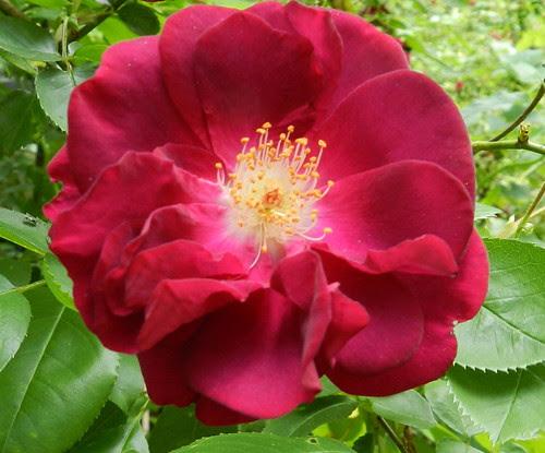 todayflowersDSCN6822