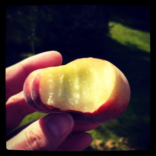 Flat #peaches from #MannOrchards #sodelicious #amazing #flatpeaches #delish