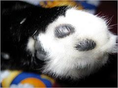 Cat pads...