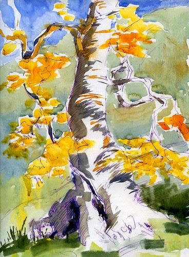 December 2010: Alum Rock - Sycamore Tree