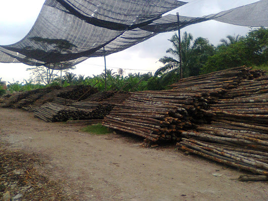 KAYU BAKAU SUPPLIER