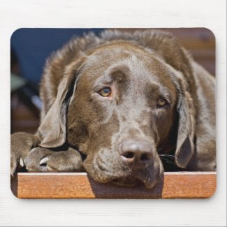 Sad Chocolate Lab mousepad, photograph, image, picture