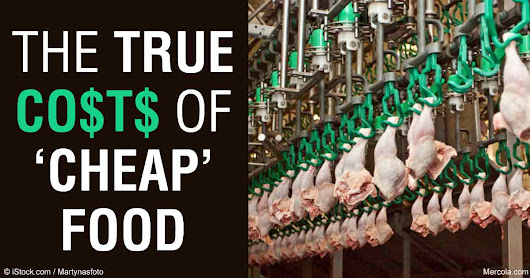 The True Costs of Industrial Agriculture