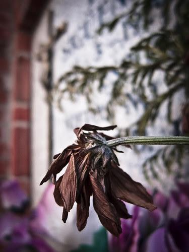 361/365 Flor seca por Juan R. Velasco