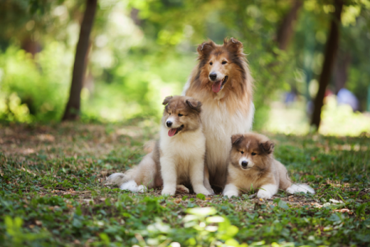 Big Fluffy Dogs - 11 Most Adorable & Huggable Fuzzy Doggie Breeds | MrsDoggie