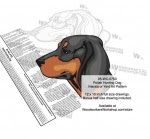 Polish Hunting Dog Scrollsaw Intarsia or Yard Art Woodworking Pattern - fee plans from WoodworkersWorkshop® Online Store - Polish Hunting Dogs,pets,animals,dog breeds,yard art,painting wood crafts,scrollsawing patterns,drawings,plywood,plywoodworking plans,woodworkers projects,workshop blueprints