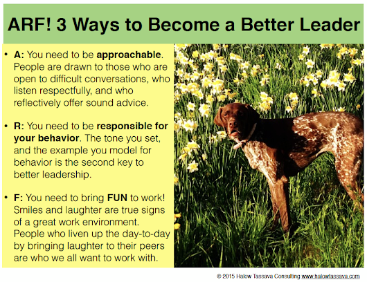Veterinary Leadership by Design | Halow Tassava Consulting