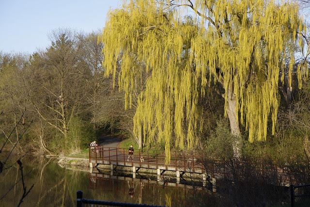 willow dock