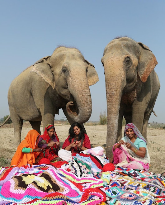 Compassionate Villagers Knit Giant Sweaters to Keep Rescue Elephants Warm