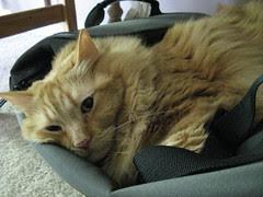 Guarding the duffel bag