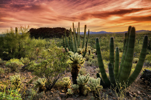 Organ Pipe Sunset  by Saija Lehtonen