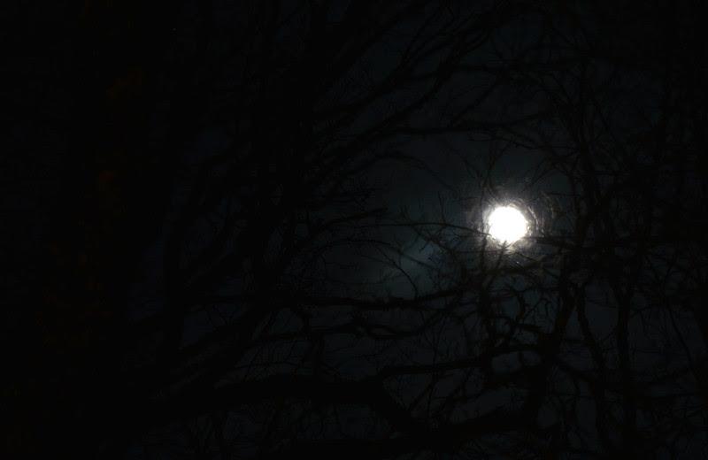 21 månen
