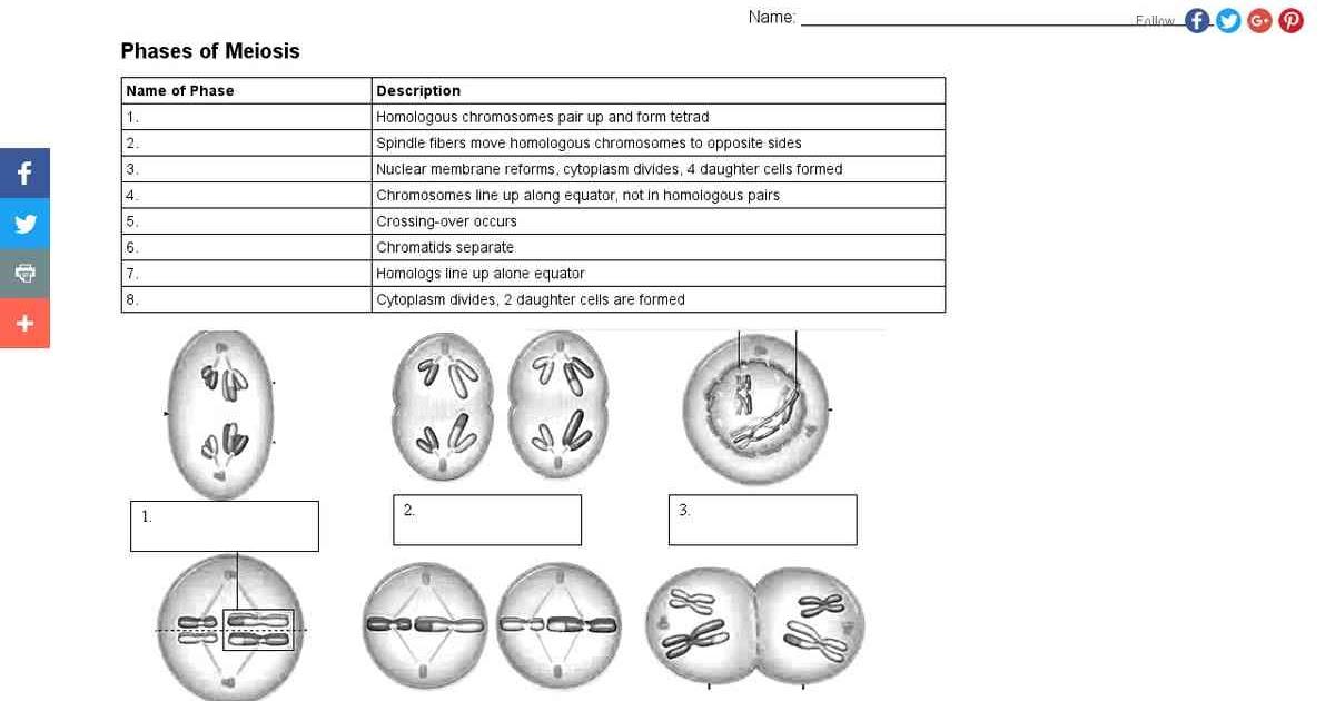 Meiosis Worksheet Answer Key Biology : Ch. 10 Study Guide