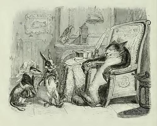 Mustela, Cuniculus et Feles