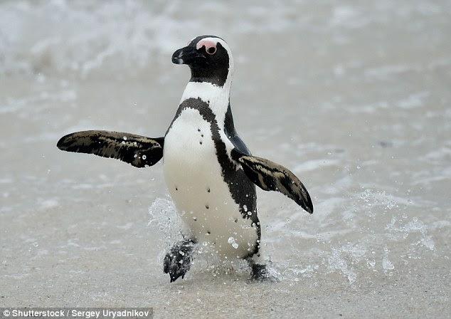Image result for juan salvador penguin