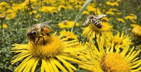 Los científicos descubren lo que está matando a las abejas, y es peor de lo que se pensaba