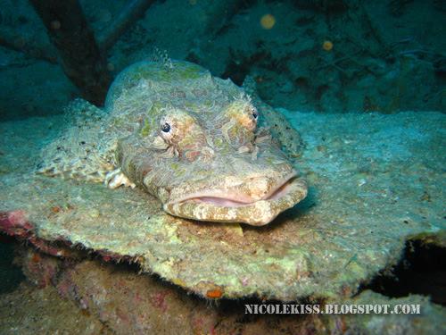 frog fish 2