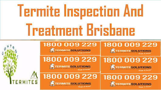 Termite Treatment and It's Solutions Brisbane