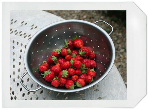 fraises_01
