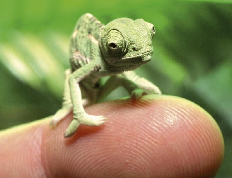 animales-miniatura-5